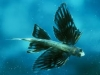 Flying-Fish