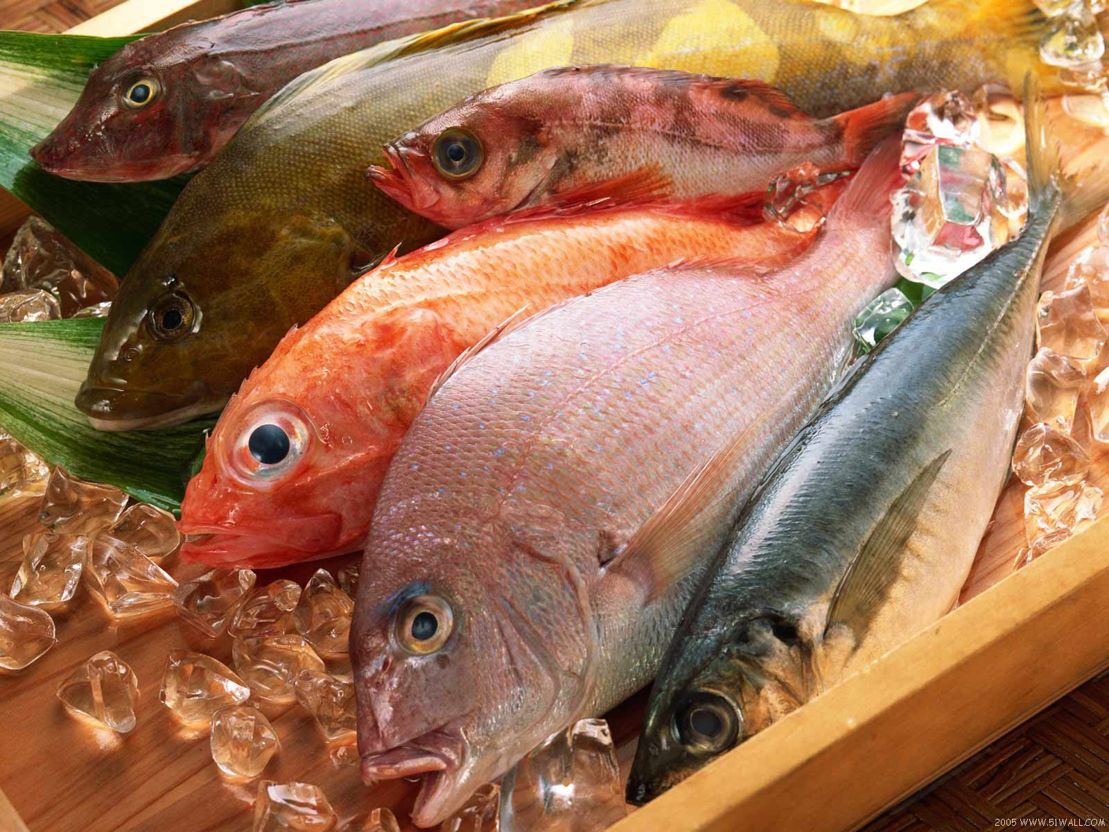fishery sector in pakistan Karachi: sindh minister for livestock and fisheries jam khan shoro has said the federal government collects all the taxes on various exportable products, including aquatic products being exported.