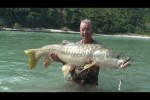 Himalayan Golden Mahseer part-2