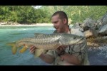 Himalayan Golden Mahseer part-1